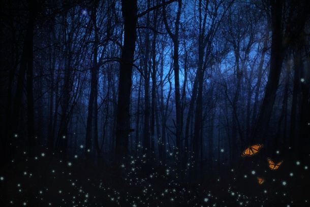 night-forest